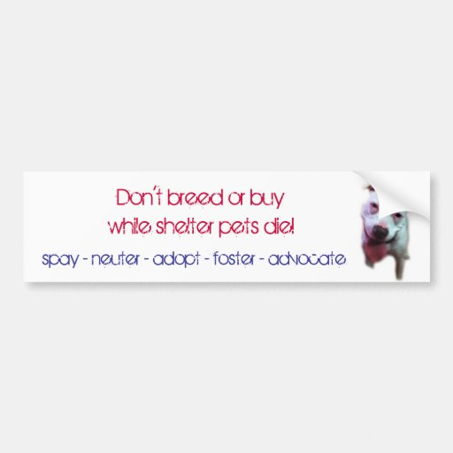 don't breed or buy while shelter pets die bumper sticker