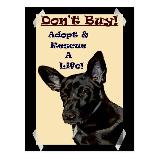 Don't Buy! Adopt & Rescue A Life! Postcard