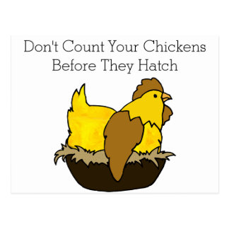 Don't Count Your Chickens Before They Hatch Postcard