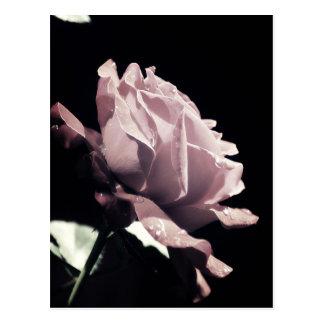 Don't cry dear Violet Postcard
