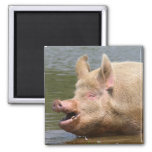 Don't eat that!!! 2 inch square magnet