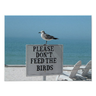 Don't Feed the Birds Poster