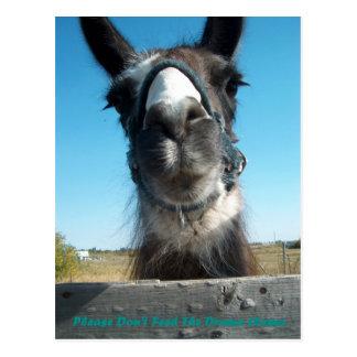 Don't Feed The Drama Llama Postcard