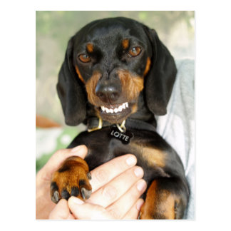 Don't mess with me dachshund postcard
