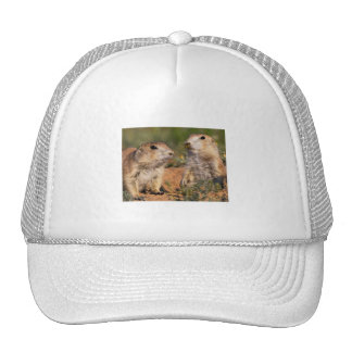 Don't Move!...Wasp Trucker Hat