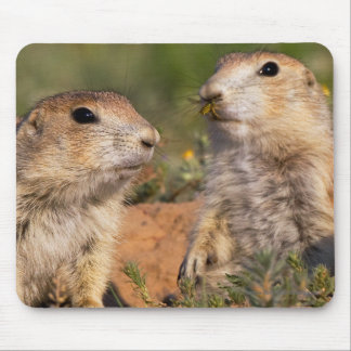 Don't Move!...Wasp Mouse Pad