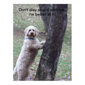 Don't play stupid with me -I'm better... Postcard