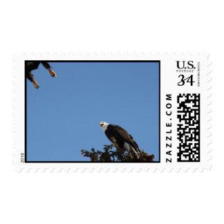 Don't Tread on Me Postage Stamp