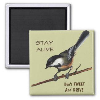 Don't Tweet & Drive: Bird: Color Pencil Art Magnet