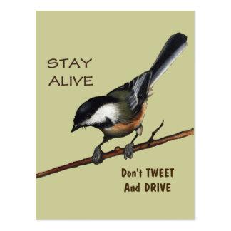 Don't Tweet & Drive: Bird: Color Pencil Art Postcard