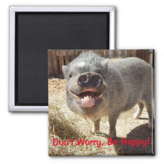 Don't Worry, Be Happy, Pig Square Magnet