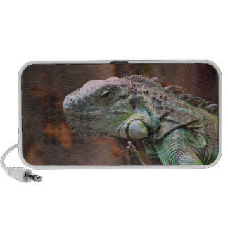 Doodle Speaker with colourful Iguana lizard