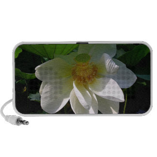 Doodle Speaker with delicate white Lotus Flower