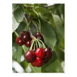 door, county, cherry, cherries, red, tree