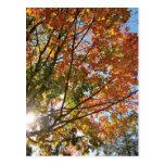 leaves, trees, fall, door, county, travel, crisp,