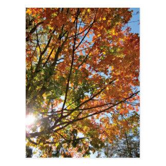 Door County Fall Post Cards