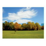 trees, color, fall, sky, country, drive, travel