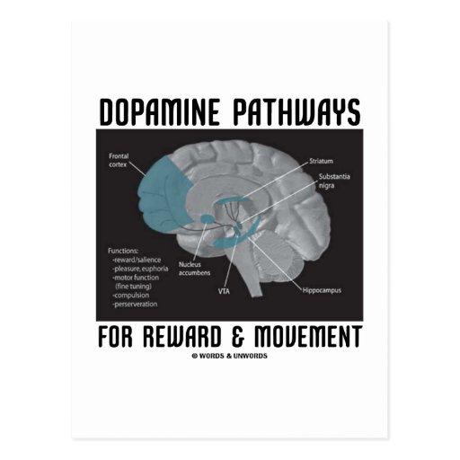 Dopamine Pathways For Reward & Movement Postcards
