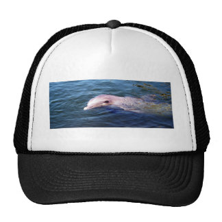 Dophin salvaje gorra