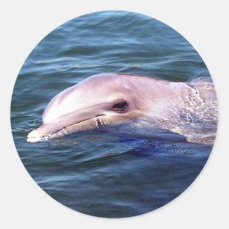 Dophin salvaje pegatina redonda