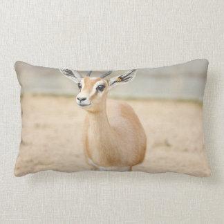 Dorcas Gazelle Photograph Pillow