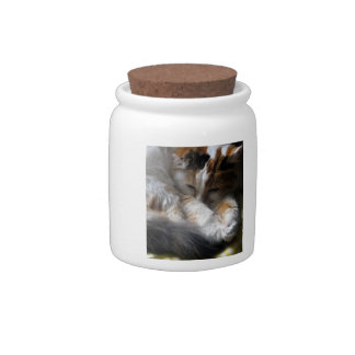 Doris Day Z - cat photograph Candy Dish
