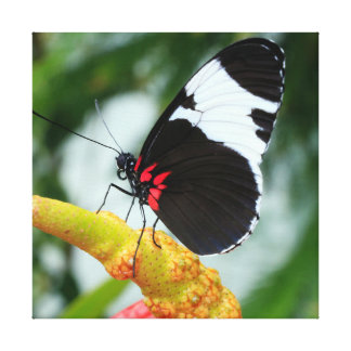 Doris Longwing Butterfly with Plant Canvas Print