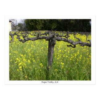Dormant vine - Napa Valley Postcard