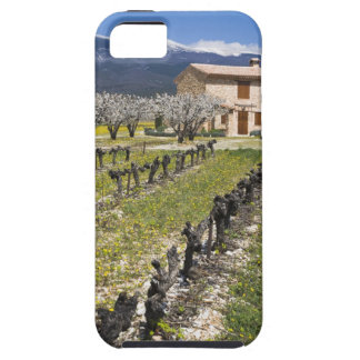 Dormant vineyard, fruit blossoms, stone house, iPhone 5 cases