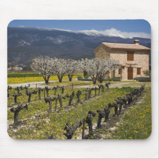 Dormant vineyard, fruit blossoms, stone house, mouse pad