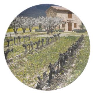 Dormant vineyard, fruit blossoms, stone house, plate