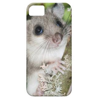 Dormouse photography phone case