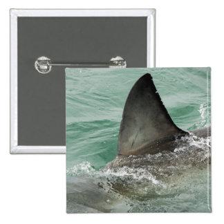 Dorsal aileron of a Great White shark Button