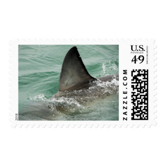 Dorsal aileron of a Great White shark Postage