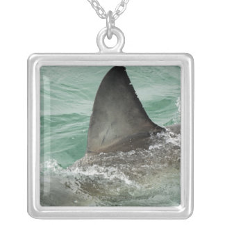 Dorsal aileron of a Great White shark Silver Plated Necklace