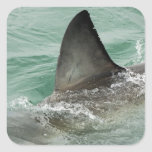 Dorsal aileron of a Great White shark Square Sticker