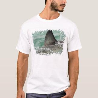 Dorsal aileron of a Great White shark T-Shirt