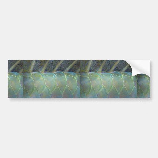 Dorsal fin and scales of a Carribean parrotfish Bumper Stickers