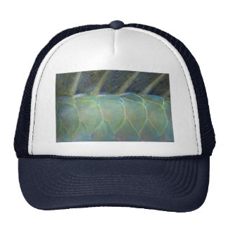 Dorsal fin and scales of a Carribean parrotfish Trucker Hat