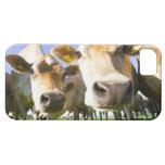 Dorset, UK iPhone SE/5/5s Case