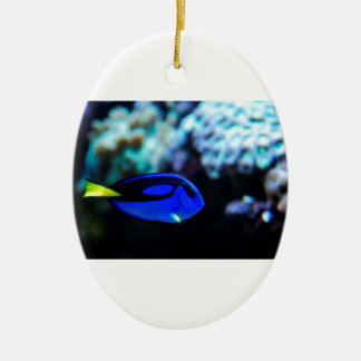 Dory , Blue Tang Fish Ceramic Ornament