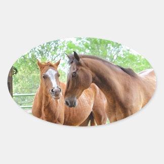 Dos amigos del caballo pegatina ovalada
