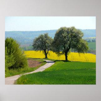 dos árboles de fruta a la vía rural, campos, campo