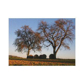 dos árboles de fruta en el campo, otoño, cielo azu