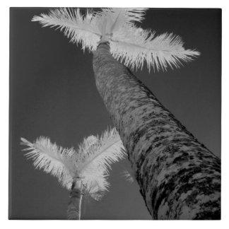 Dos árboles de palma infrarrojos azulejo cuadrado grande