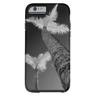 Dos árboles de palma infrarrojos