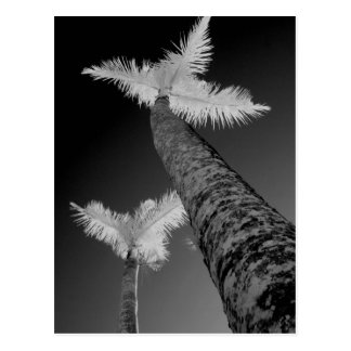 Dos árboles de palma infrarrojos postal