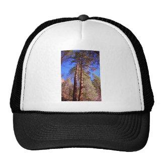 dos árboles en las maderas gorras de camionero