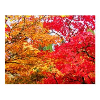 Dos arces en otoño postal