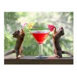 Dos ardillas que beben un cóctel postal